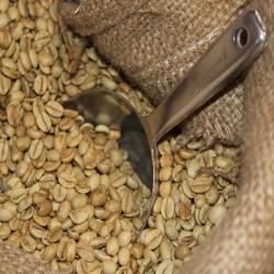 Rohkaffee aus Indien,...